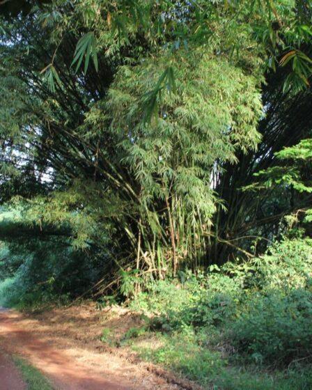 Ghana - Bobiri Forest