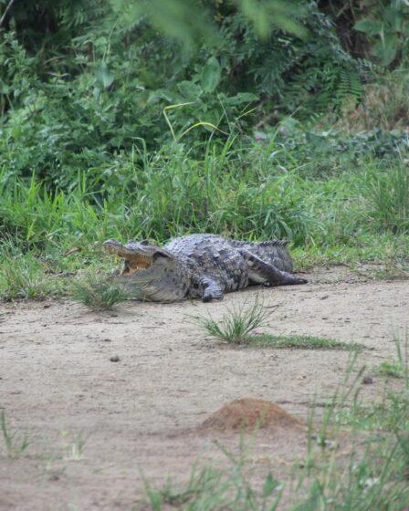 Ghana - Kakum (Nationalpark)