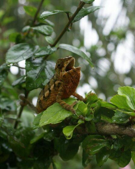 Madagaskar - Akanin Ny Nofy