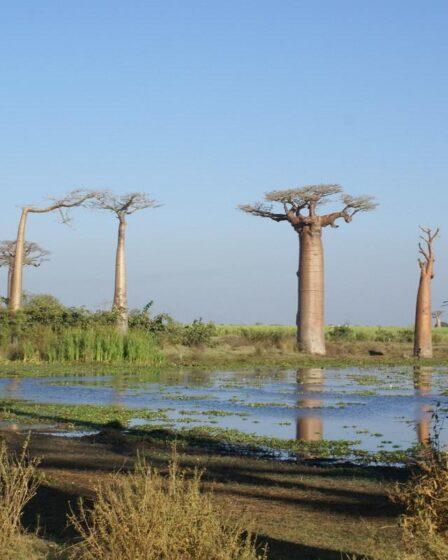 Madagaskar - Morondava