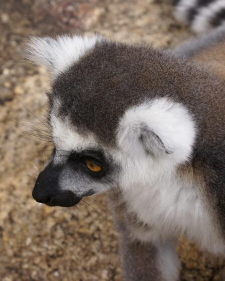 Madagaskar - Ambalavao