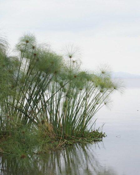 Kenia - Lake Naivasha