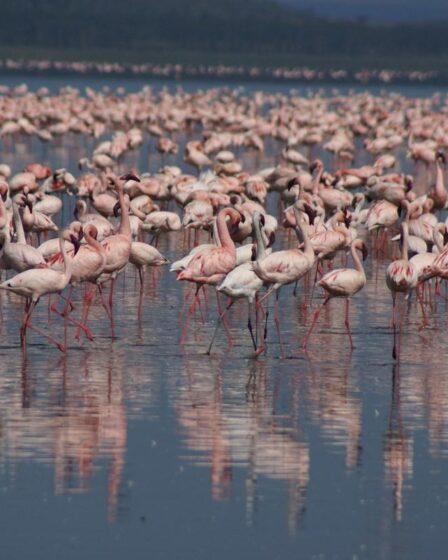 Kenia - Lake Nakuru