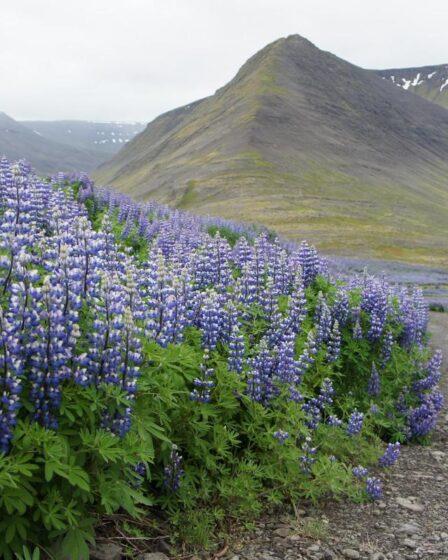 Island - Vestfirðir